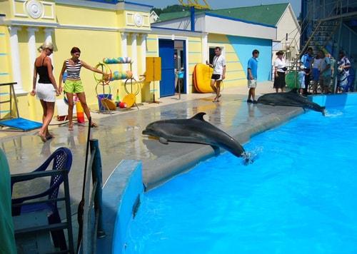 Дельфинарий «Аква-Мир», отдых, семейный, с детьми, Черное, море, Краснодарский, край, Ольгинка, отель, Лелюкс,